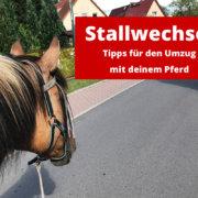 Umzug / Stallwechsel mit Pferd: Tipps für den Umzug mit deinem Pferd