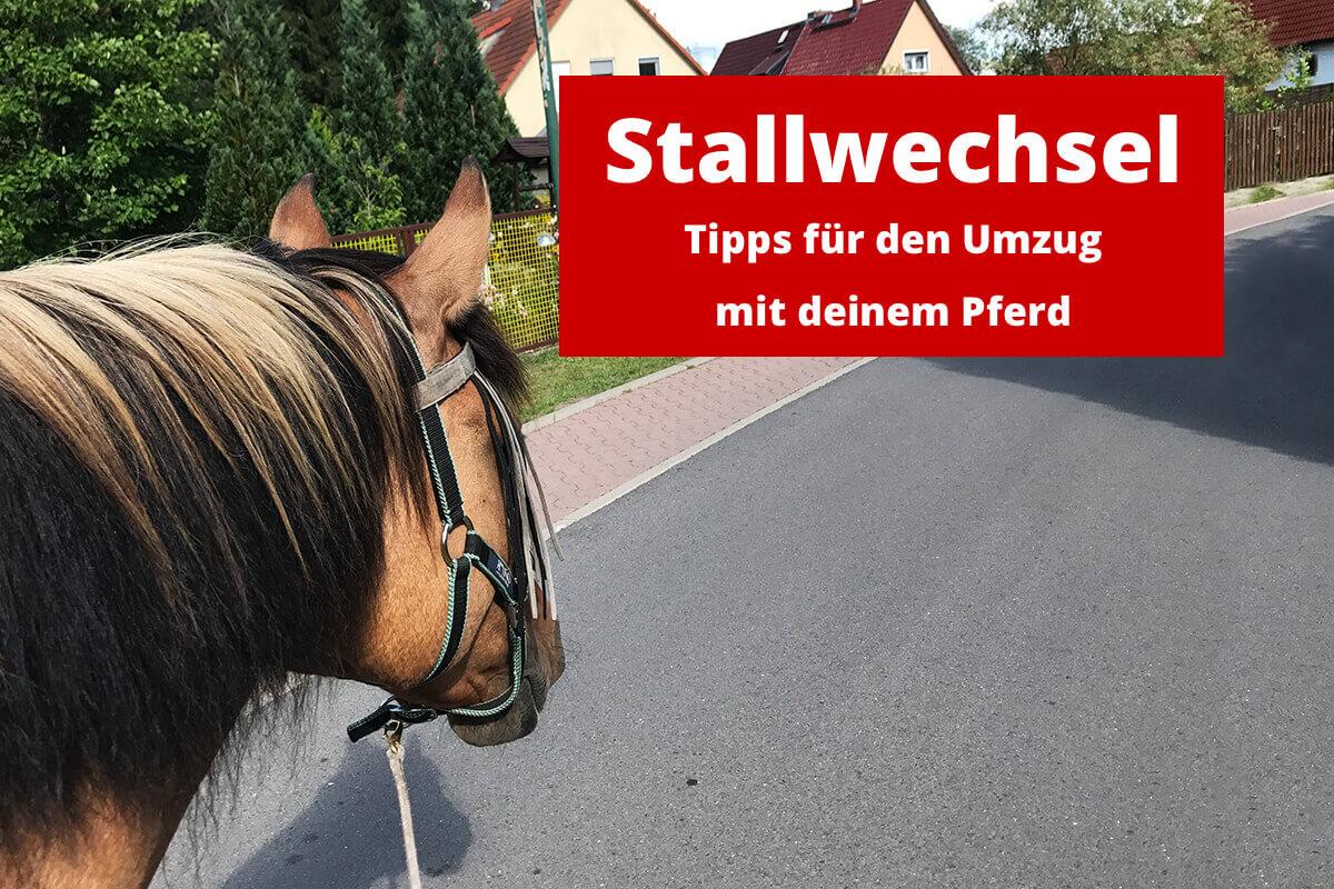 blog stallwechsel umzug mit deinem pferd ponystoff. Black Bedroom Furniture Sets. Home Design Ideas